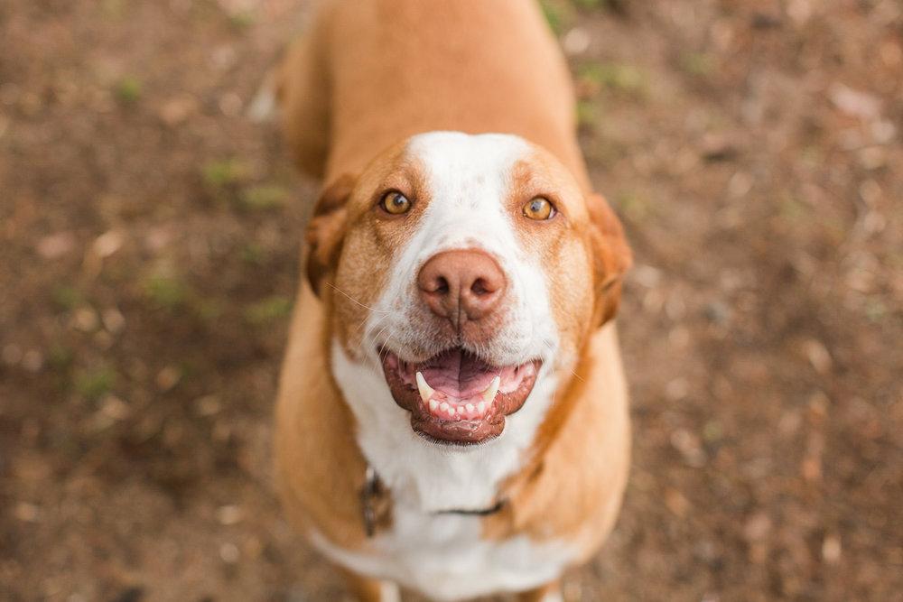 rescue-dog-2.jpg