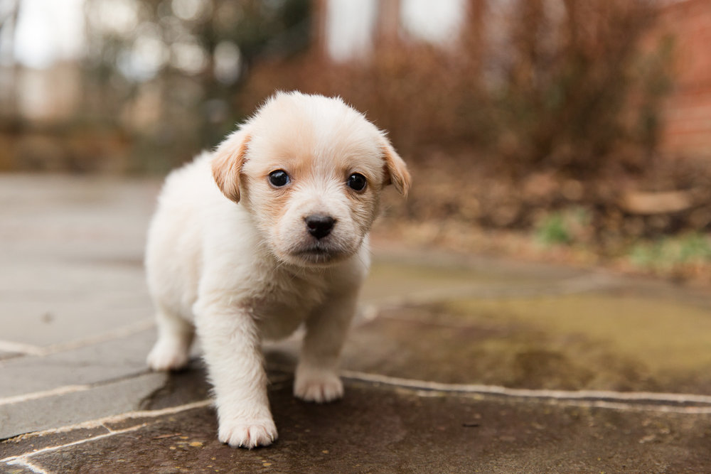 rescue-dog-6.jpg
