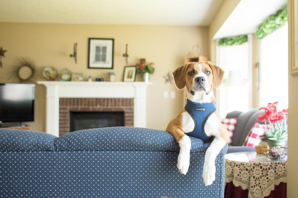 northern-virginia-dog-photographer-1.jpg