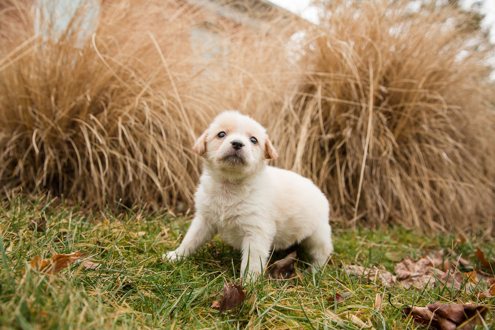 rescue-dog-7.jpg