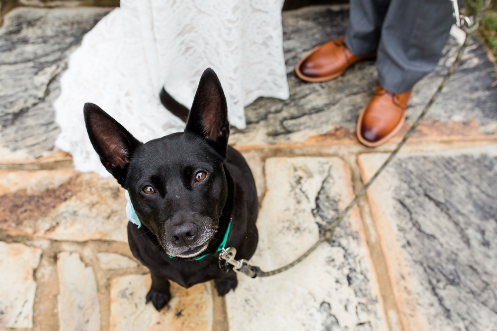 Wedding dog at dog-friendly venue in Leesburg, Virginia