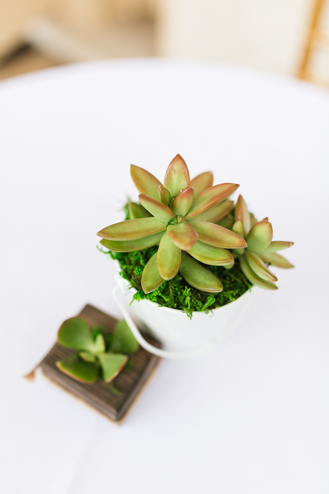 Succulents as sustainable wedding favors and decorations