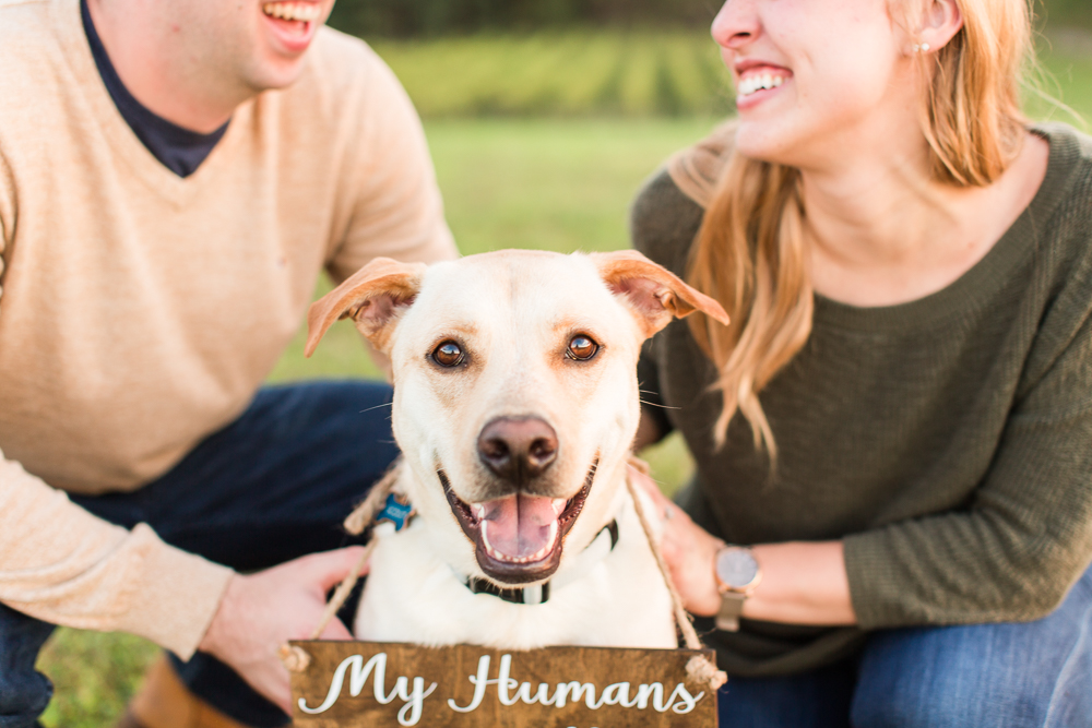 """Happy dog with """"My humans are getting married"""" sign"""