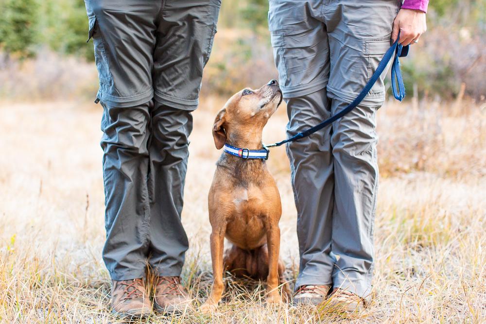 Dog with Colorado flag collar looking up at her parents   Hiking at Long Lake, Colorado