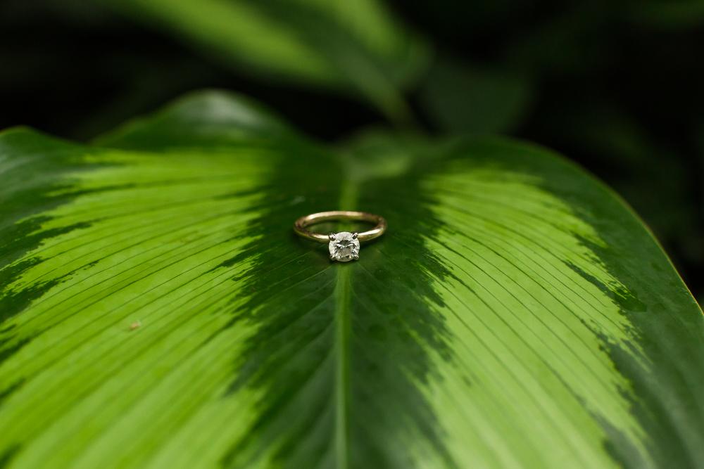 Engagement ring on a giant leaf during botanic garden engagement shoot