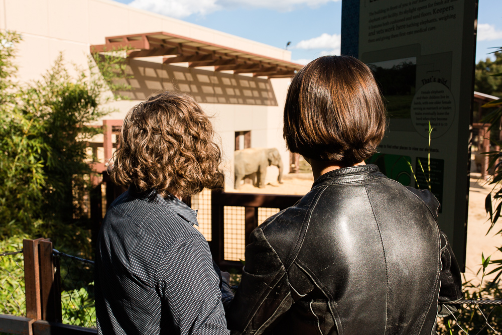 Looking at the elephants at the Washington DC zoo | Fun engagement pictures