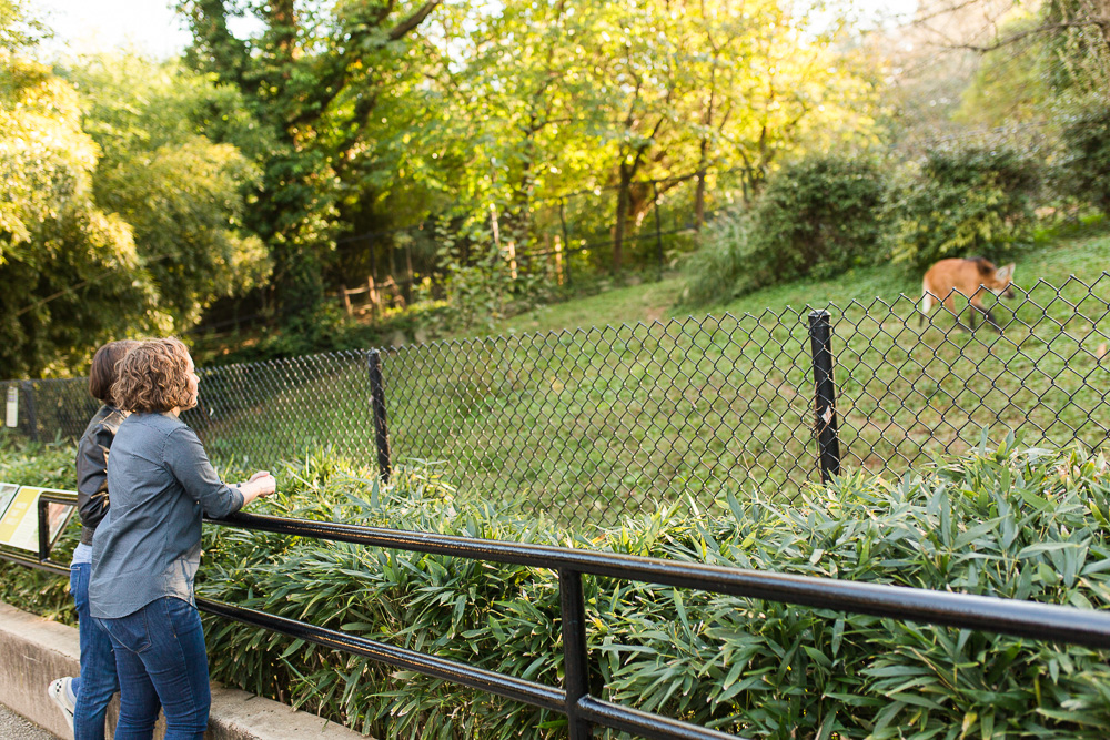 Engaged couple looking at the maned wolf at the National Zoo | DC Engagement Photographer