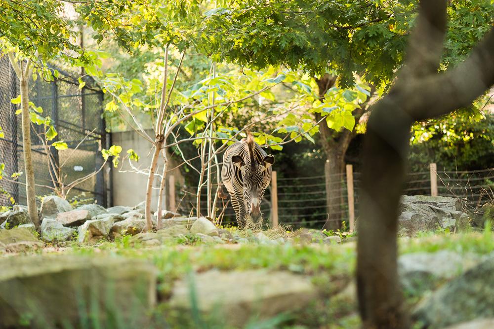 national-zoo-engagement-photos-73.jpg
