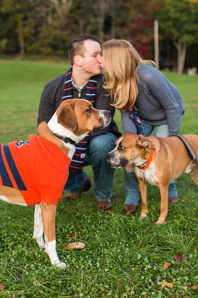 Dogs pose in front while engaged couple kisses behind them