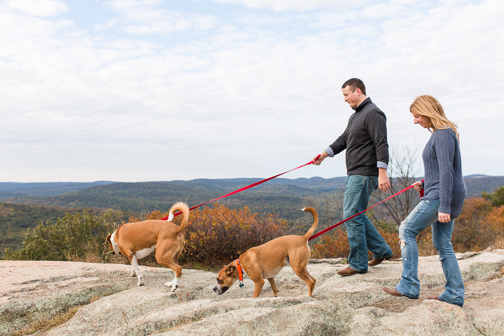 Walking boxer mixes across the rocks during fall engagement session at Bear Mountain State Park | Engagement photos with dogs