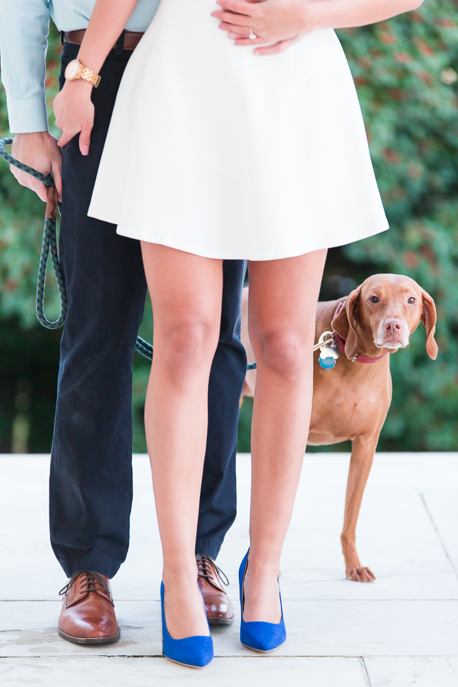 Vizla poking her head out from behind her parents' legs during their engagement session at the Jefferson Memorial
