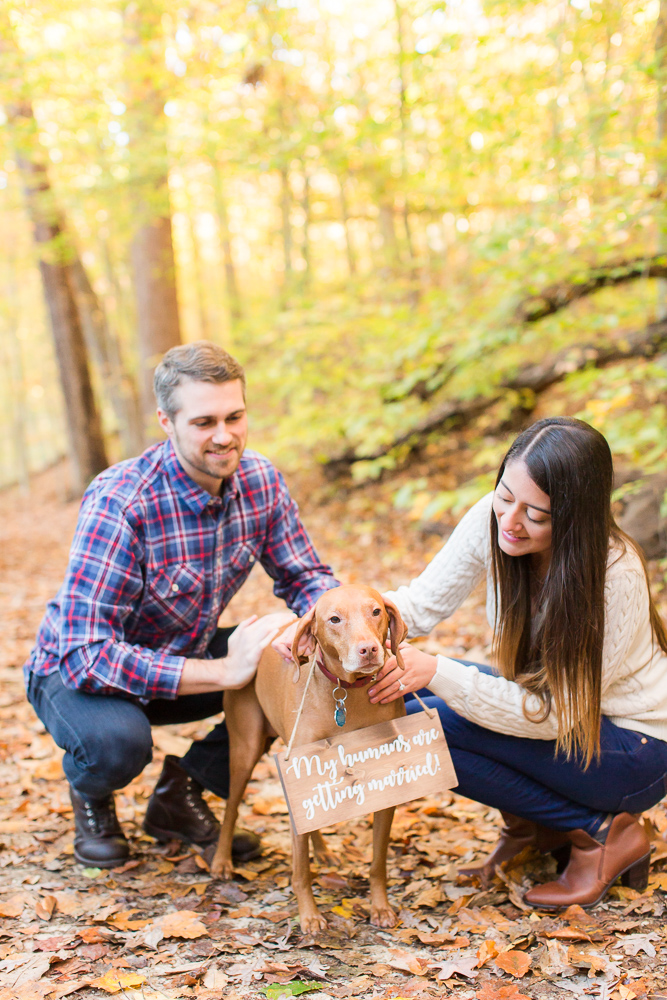 Dog with My Humans are Getting Married sign during a fall engagement session in DC