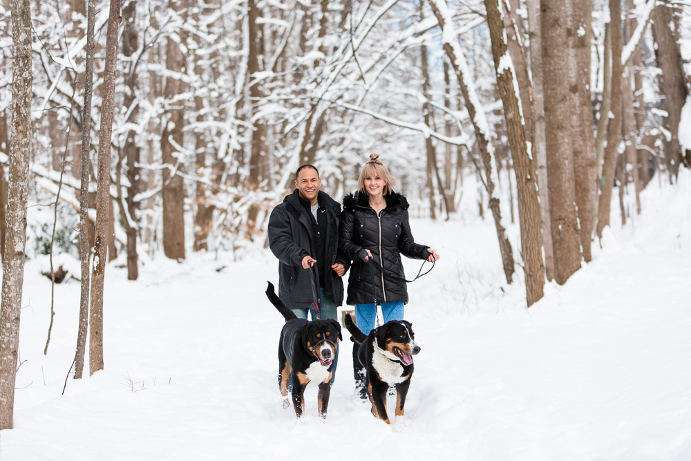 Couple walking their Greater Swiss Mountain Dogs along the tree-lined trail covered in snow | Northern Virginia winter engagement pictures with dogs