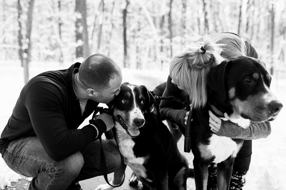 Documentary style photography of couple hugging their Greater Swiss mountain dogs