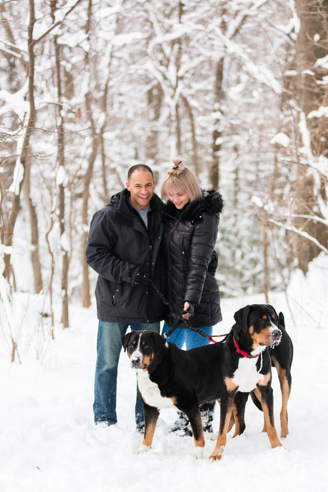 Candid photo of engaged couple with their Swissies in the snow | Winter engagement pictures in Northern Virginia