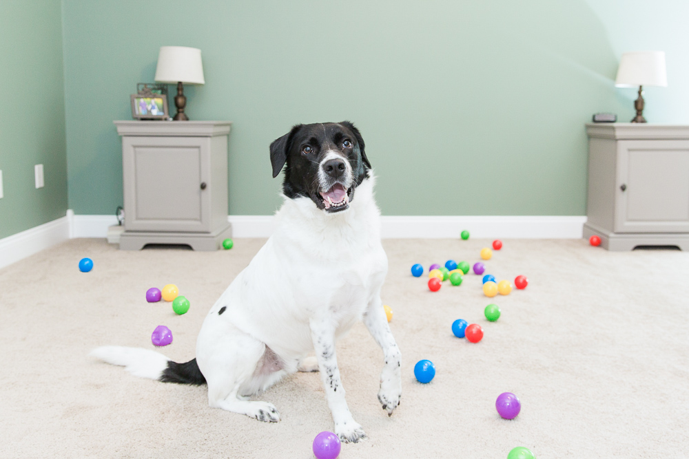 Ball pit room for dog fun