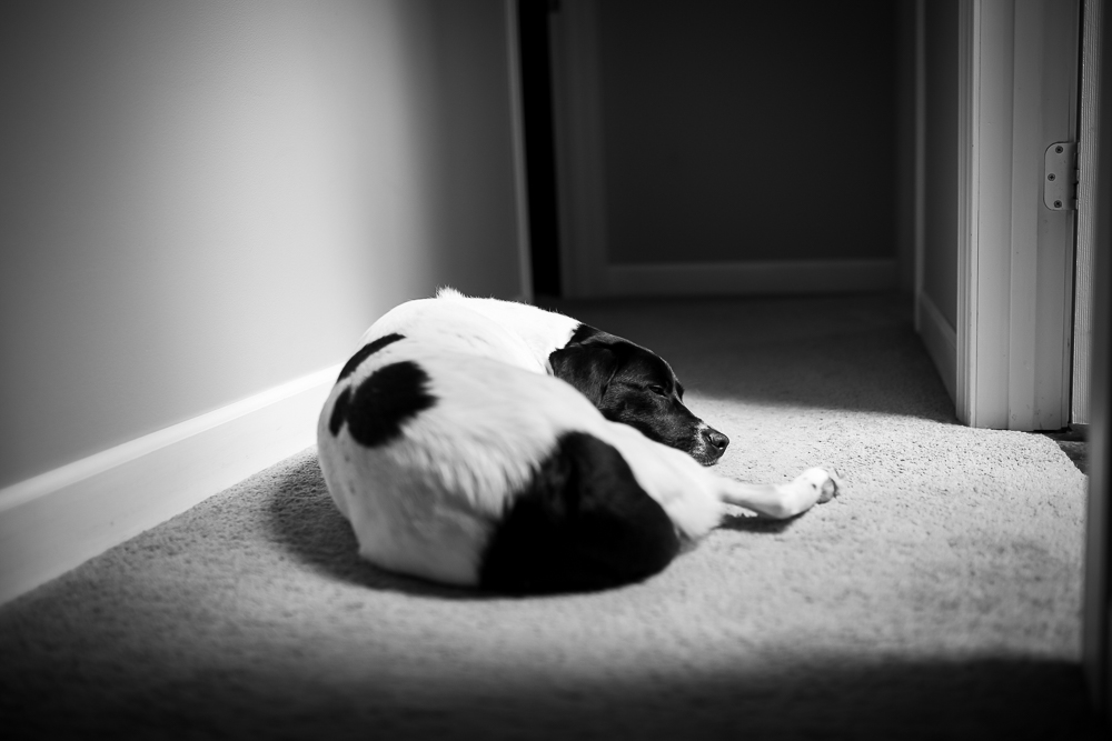 Black and white dog napping in the hallway, keeping warm in the sun from the skylight