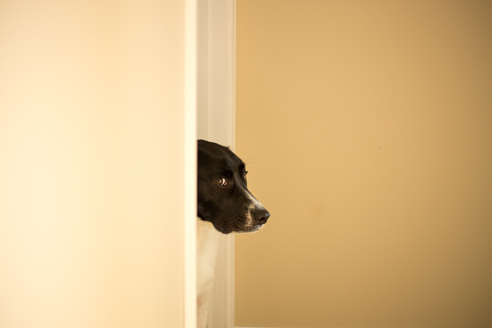 Fearful dog peeking his head out of the bedroom door, afraid of the vacuum cleaner