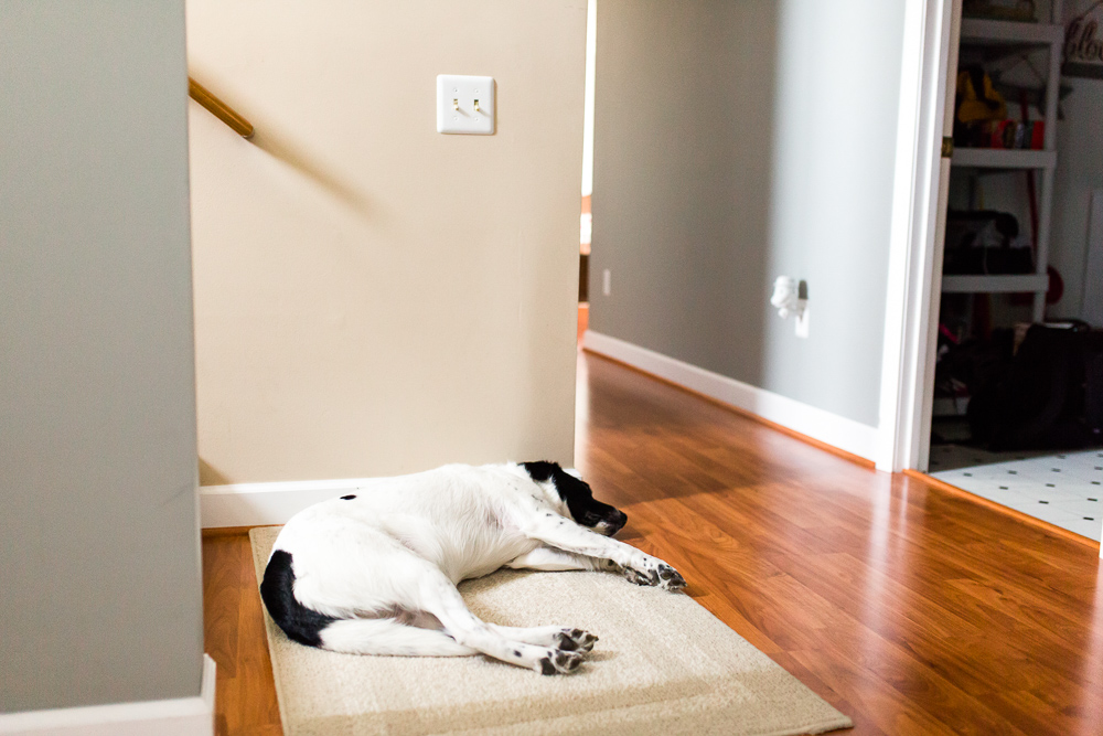 Sleeping pup on area rug at the bottom of the stairs | Documentary dog photography