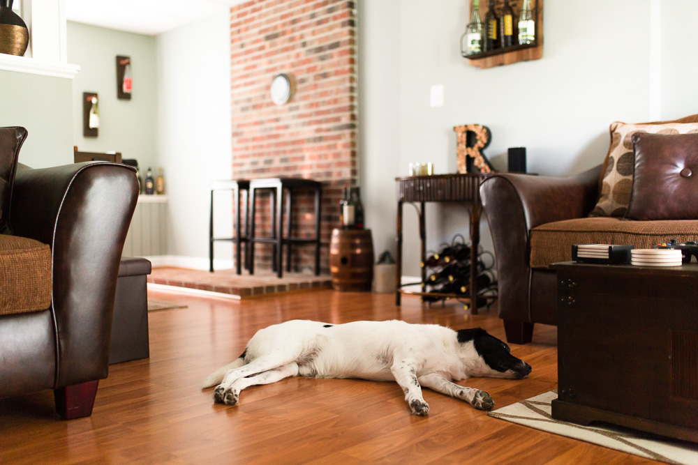 Lazy dog sleeping on the hardwood floor during a lifestyle dog photography session in Northern Virginia