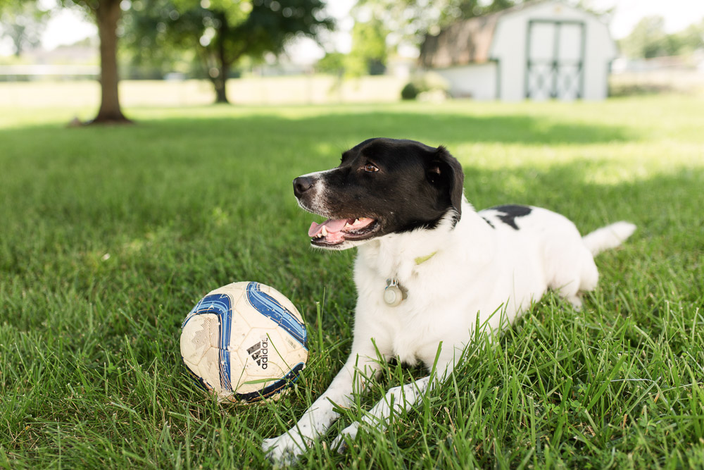 Happy pup with his soccer ball