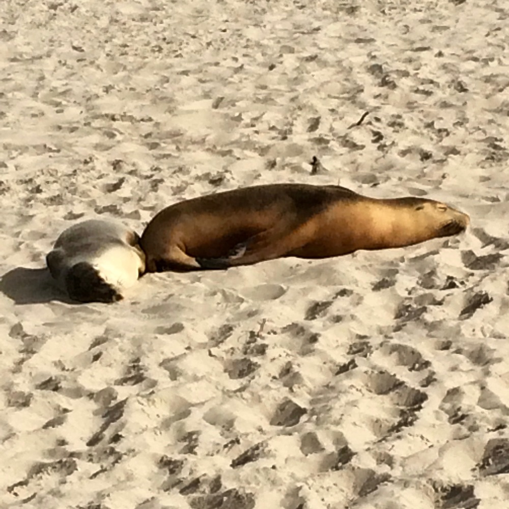 The seals were so lazy in the sun.