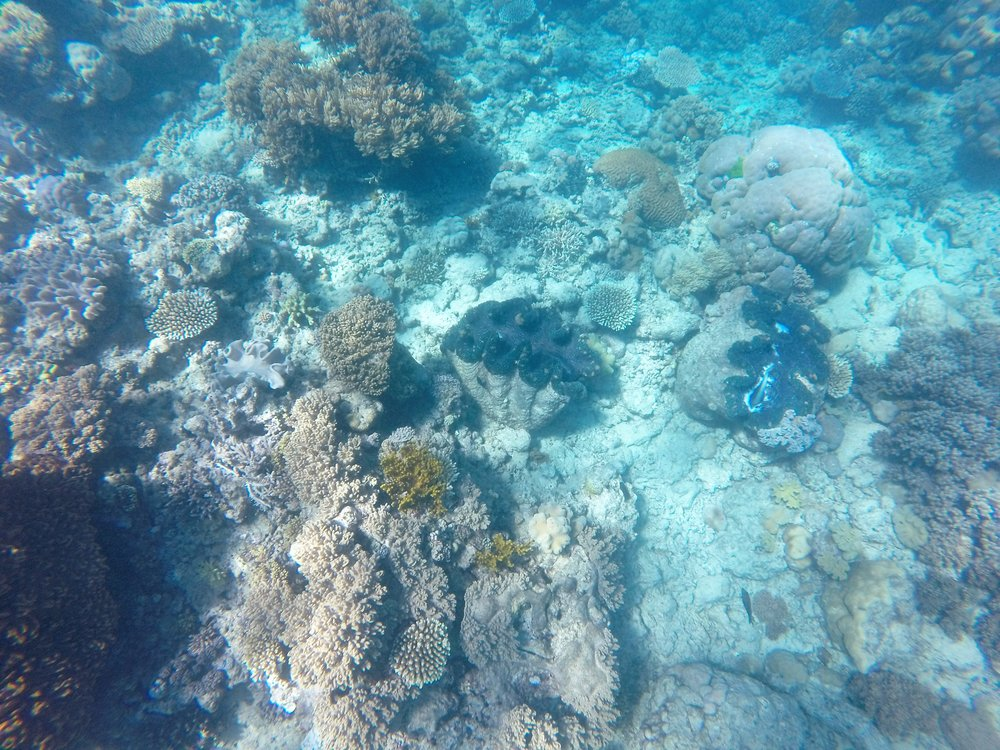 The giant clam!  Photo Credit: Matthew's Go Pro