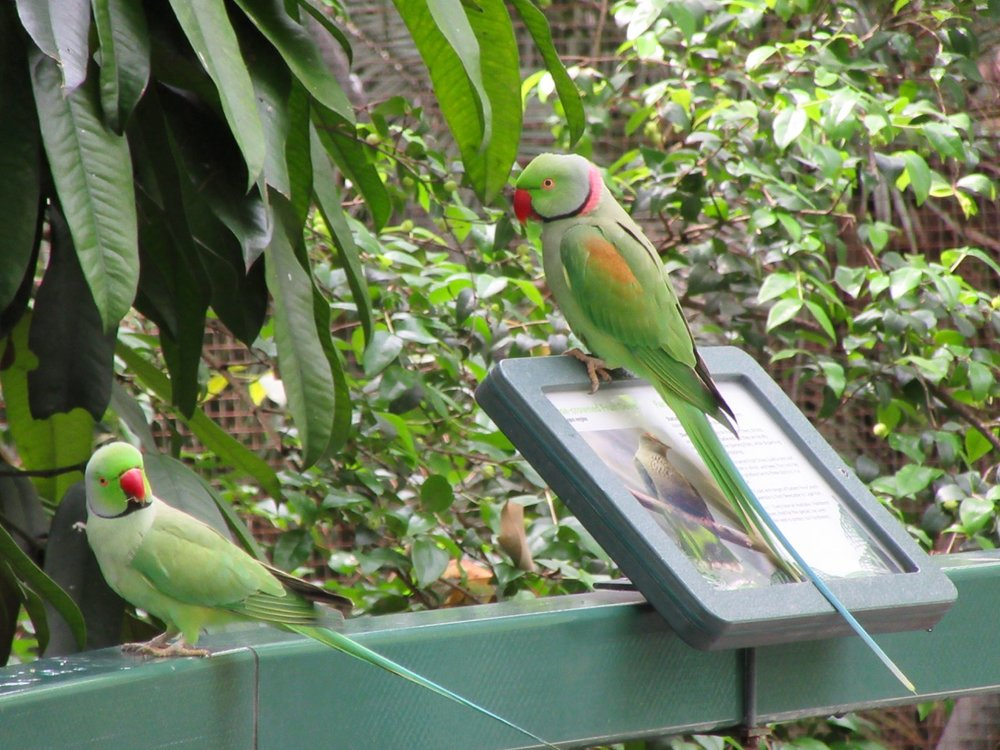 Parrots at the Rockhampton Zoo.