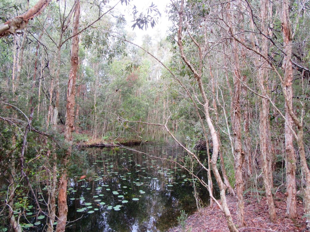 One of the picturesque scenes from our bush walk.