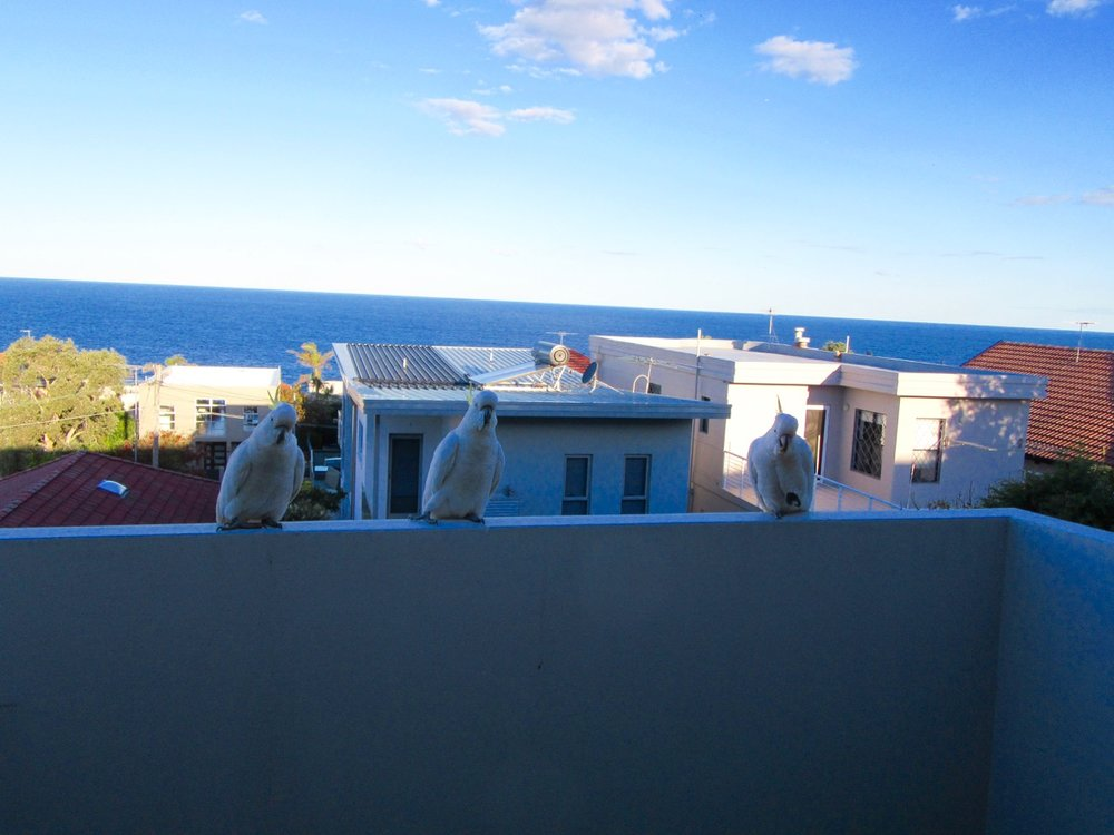 Visitors on Irina's balcony.  What a view!
