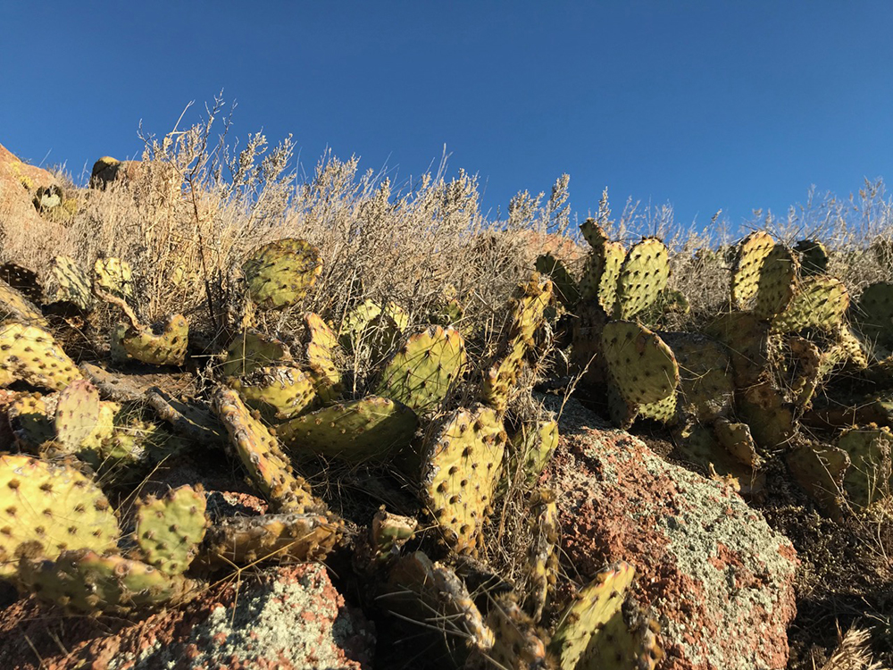 Cacti seen while hiking Baldy Point