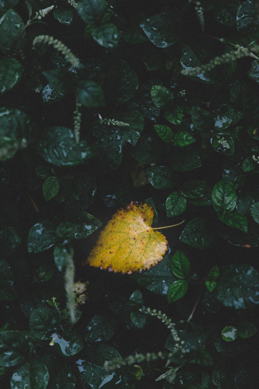 darren-wong-photography-singapore-botanic-gardens