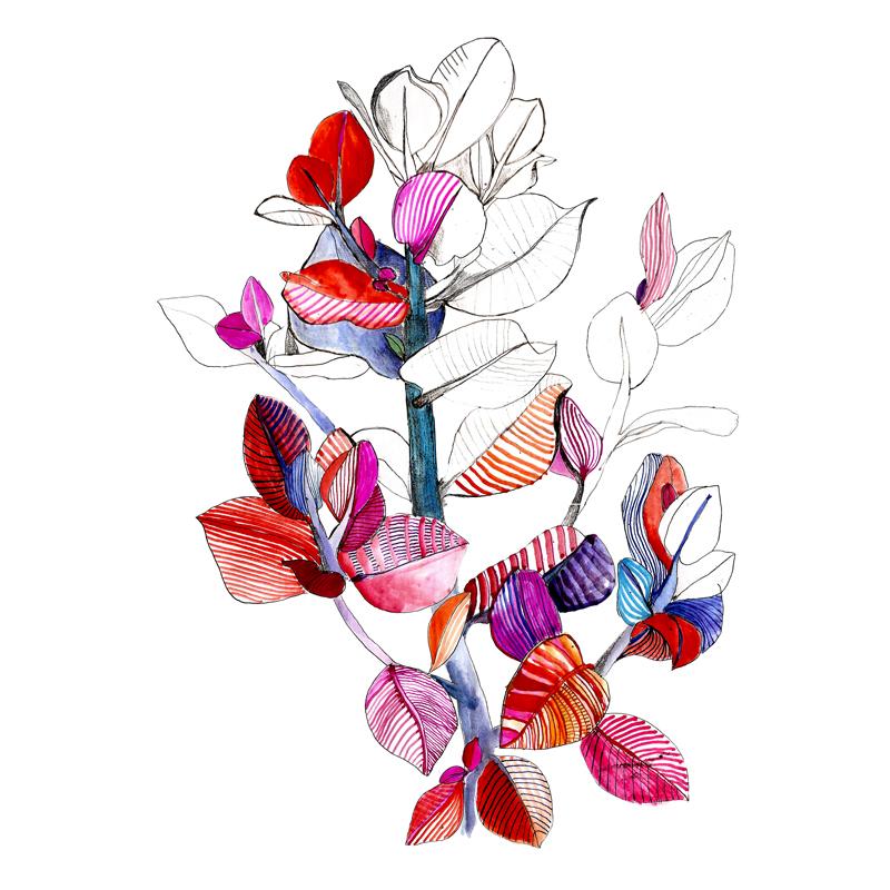 botanical-plant-illustration_square_eleni-malami_web.jpg