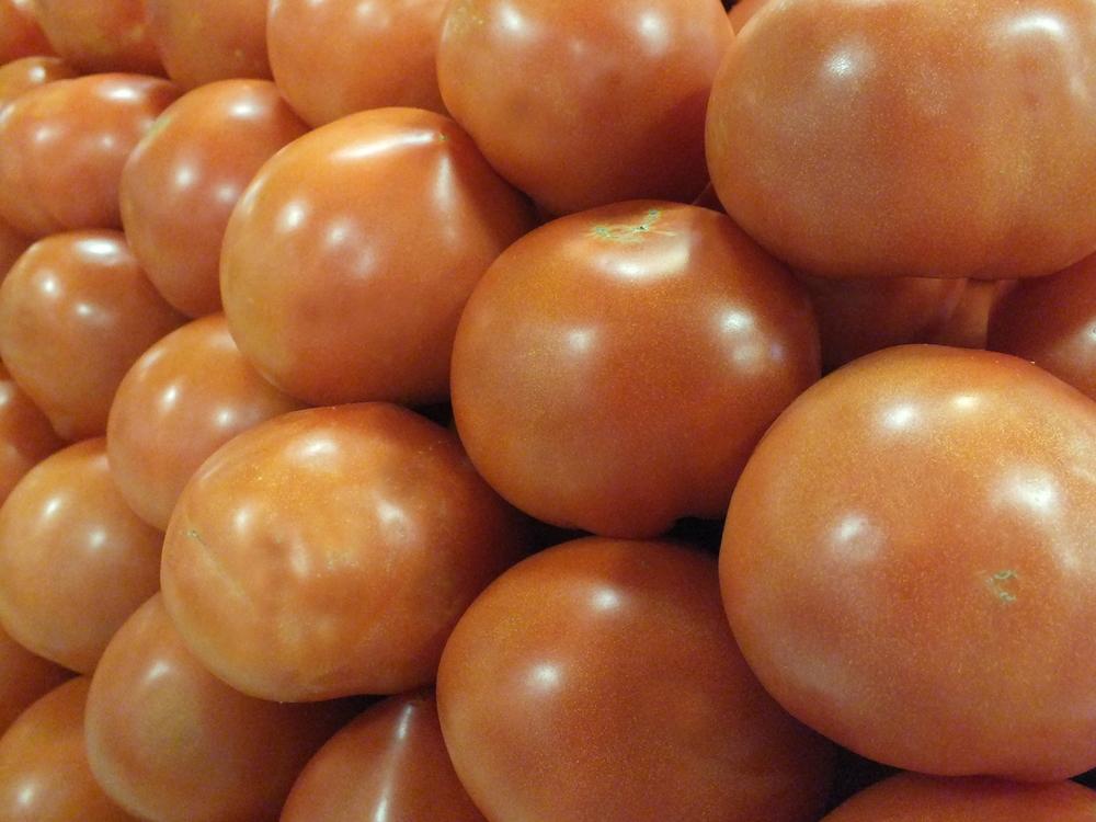 Field Tomatoes -3.JPG