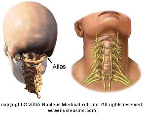 Atlas Vertebrate