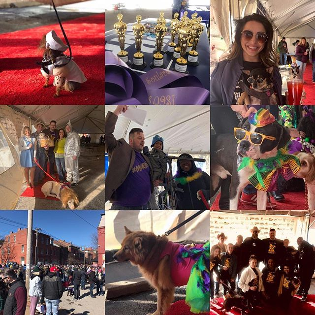 What a great time today! Thanks to everyone who came by @1860soulard for the first ever Paw-Oscars. #stl #soulard #missouri #doggo #fun #cityofstlouis #stlouisonly #wearelive #gatewaypetguardians #showmeyourpitties #rescue #funtimes #instadogs #dogsofinstagram #mardigras