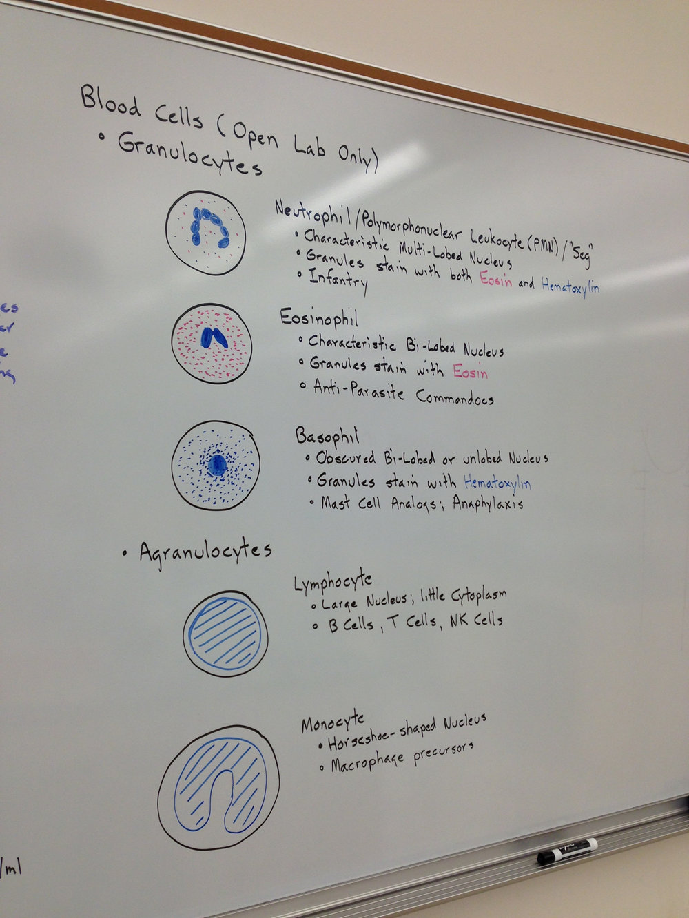 Microbiology laboratory Northern California University in Davis