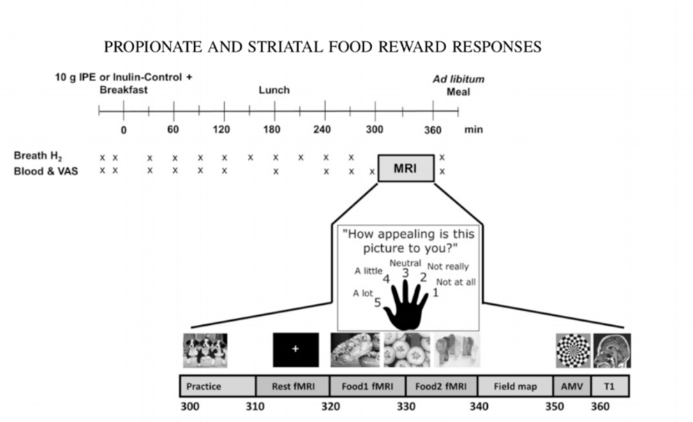 short chain fatty acids produced via colonic fermentation and food reward responses
