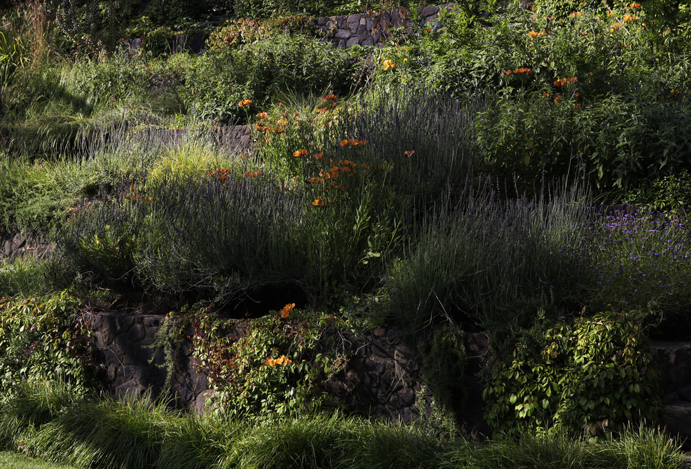 Layered plantings of California natives and sustainable garden design - Topanga Canyon - Los Angeles garden design by Campion Walker Landscapes