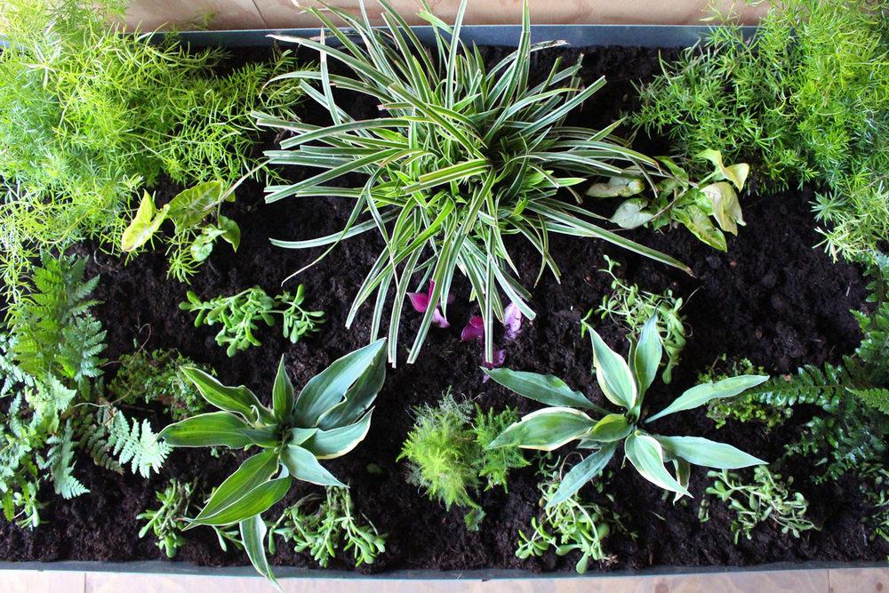 Water loving plants