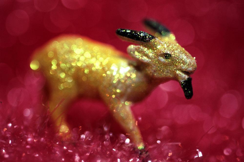 Yellow-Goat-#3---.jpg