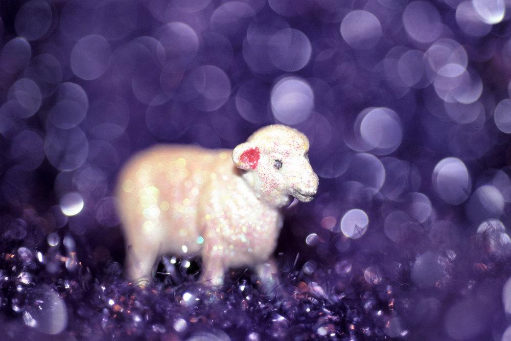 Dream-Sheep--.jpg