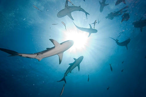 circling-sharks.jpg
