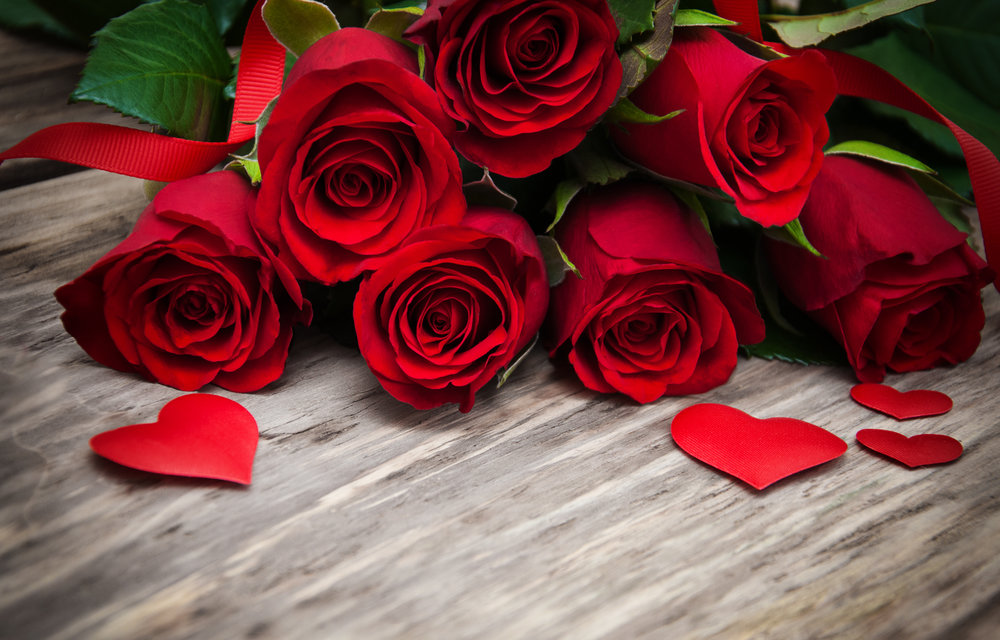 wallpaper-red-roses-petals-hd-flowers-rose-images-of-iphone-high-quality.jpg