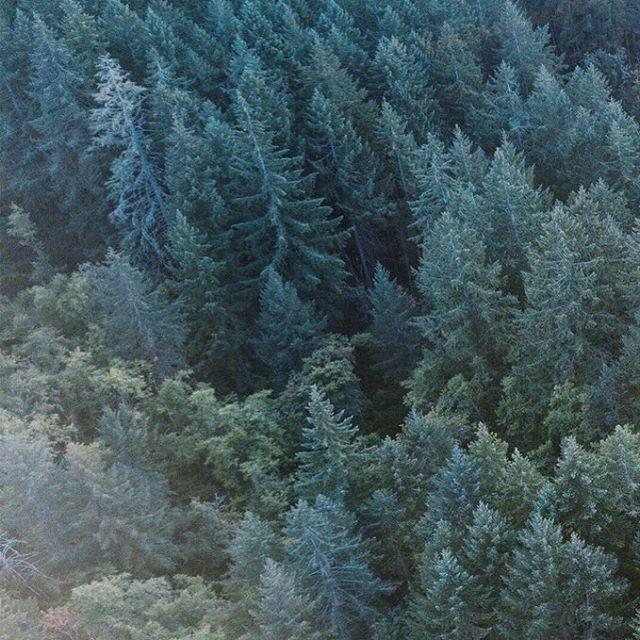 🌲🌲🌲 . . . . . . . . . . #nature #vsco #vscocam #vscox #vscovideo #mextures @mexturescollective #adobe #aftereffects #lightroommobile #video #dji #drone #dronephoto #dronephotography #dronevideo #mavicpro #djimavicpro #shotfromabove #agameoftones #grid #create #createexplore #createexplorediscover #trees #forest @unumdesign #unumfam