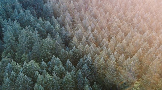 🌲🌲🌲 swipe for the loöp . . . . . . . . . . #nature #vsco #vscocam #vscox #vscovideo #mextures @mexturescollective #adobe #aftereffects #lightroommobile #video #dji #drone #dronephoto #dronephotography #dronevideo #mavicpro #djimavicpro #shotfromabove #agameoftones #grid #create #createexplore #createexplorediscover #trees #forest @unumdesign #unumfam