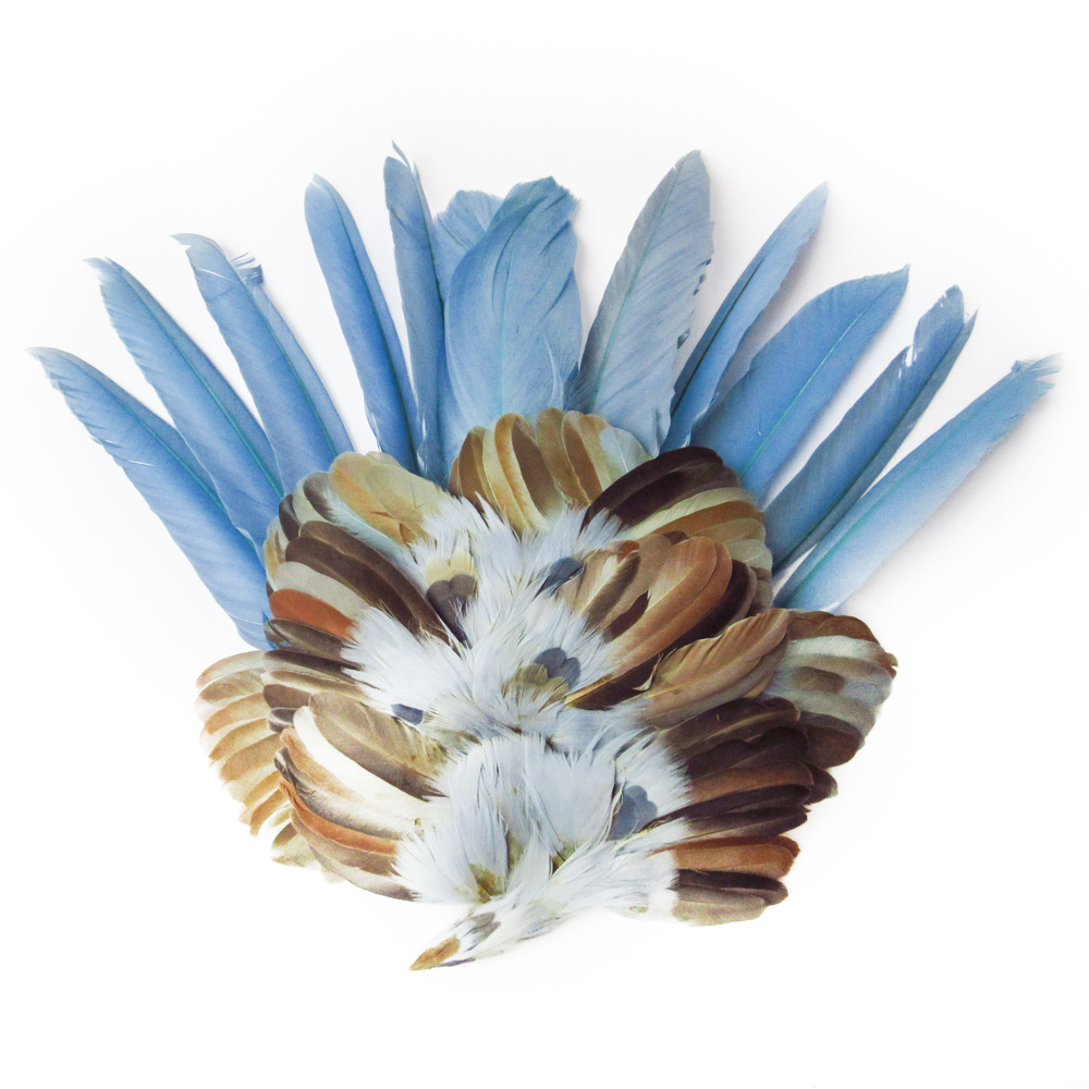 Clear blue feathers