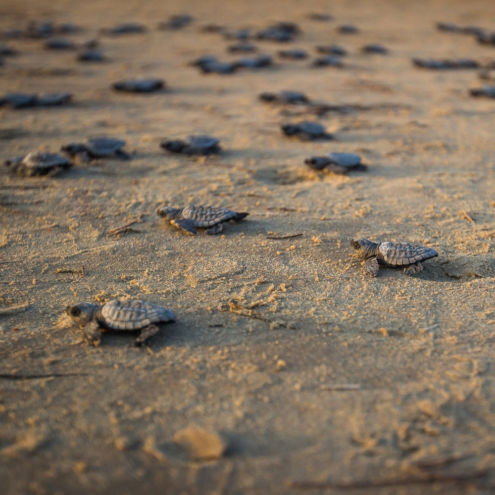 Sea Turtle Release.jpg