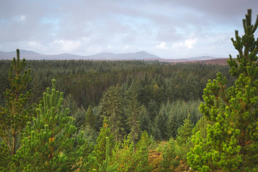 Fraser_Taylor_Scotland-2.jpg