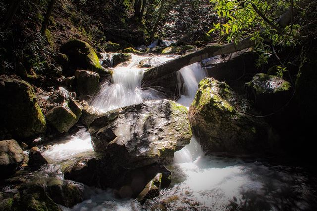 Monday Funday! Several months of tech are coming to an end... and the sun has finally come out after what feels like months of rain! If only I had brought my tripod... . . . #longexposure #longexposurephotography #riverphotography #waterfall #waterfallphotography #riverphotography #nature #naturephotography #mountdiablostatepark #backcreektrail #fallstrail #eastbayphotography #sfbayarea #california